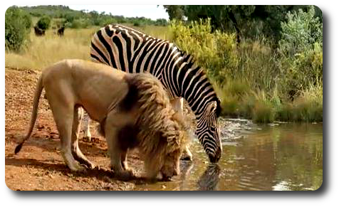Safari Apéro 2