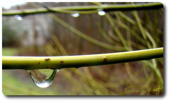 larme de pluie