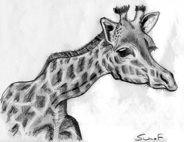 girafe_sunof.net